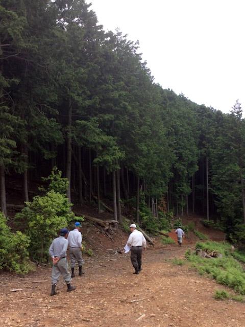 京都府京都市京北山国町稲荷谷の山林の調査と立木の伐採・搬出作業