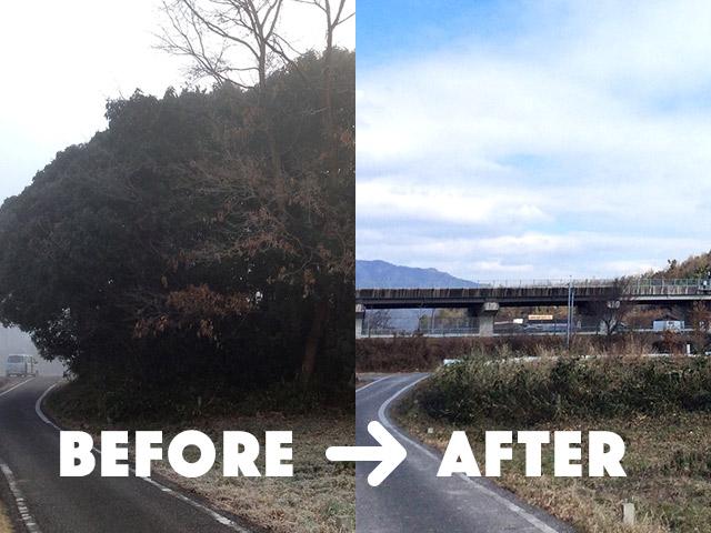【京都府亀岡市】長年放置されジャングル化してしまった畑を見通し良くスッキリ伐採してほしい(7)