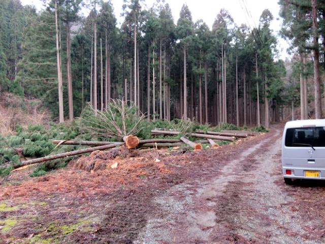 京都府南丹市美山町での伐採