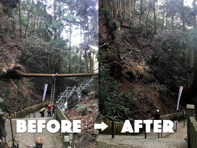 【京都市左京区】台風による危険木・障害木の被害対応