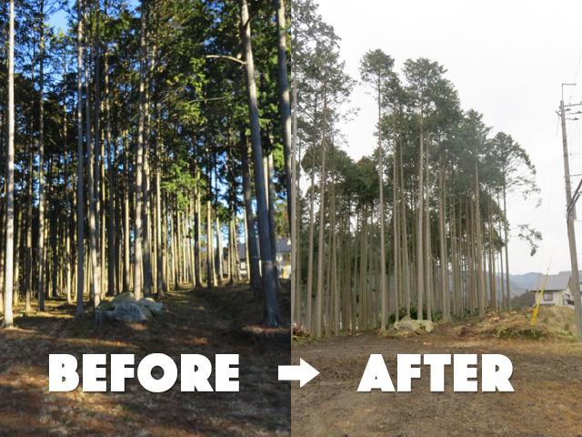 【京都市左京区大原】素直に育った杉やヒノキを伐採・搬出(15)