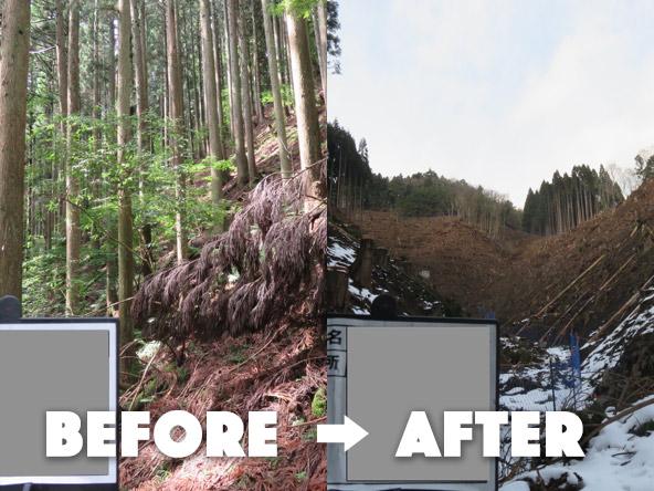 【京都府船井郡京丹波町】京都は当社が初コンテナ苗の植林を試験的に行った(16)