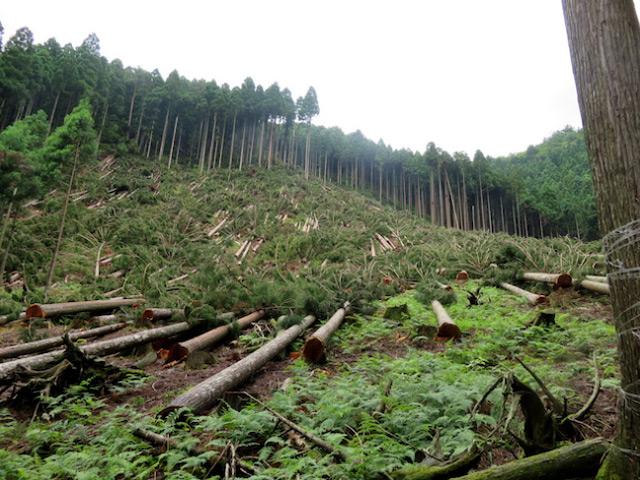 京都府南丹市美山町田歌マスブチの山造りのお手本のような山