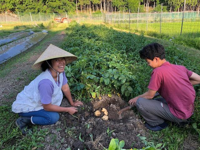 野菜を収穫して農家体験ができます