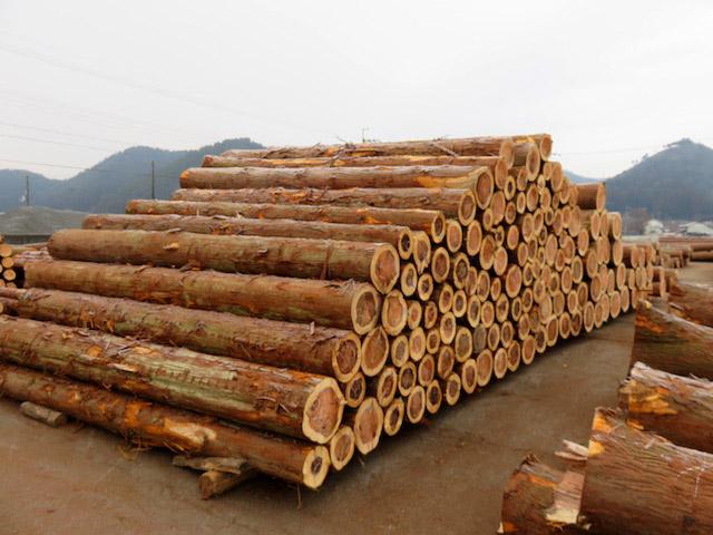 太った木が売れないのは、場所をとってしまうということも考えられる
