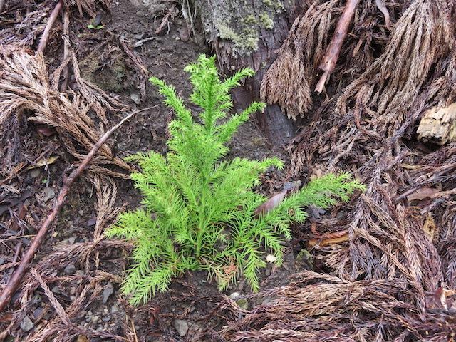 私たちは山主さんから山の木を買い伐って植えています。