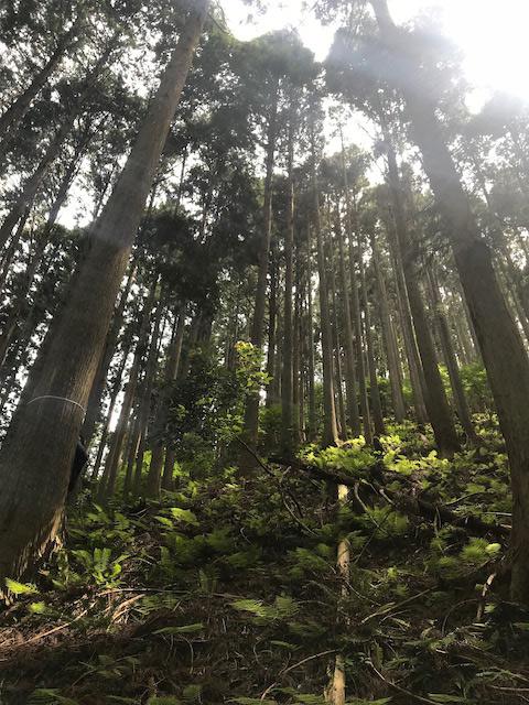 世界の森林は減っているが、日本の森林は増えつづけている