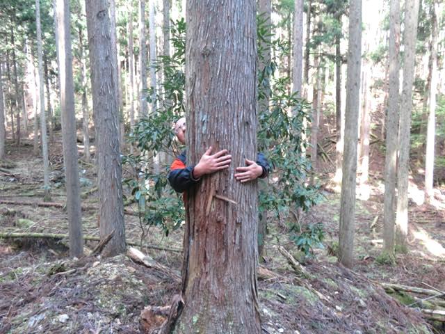 木に触ってみてください。