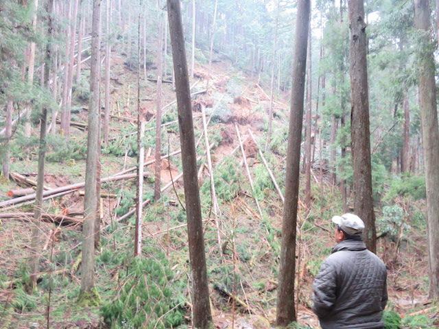 【京都府南丹市美山町原】地元地区の山の台風で倒れた木を搬出しました