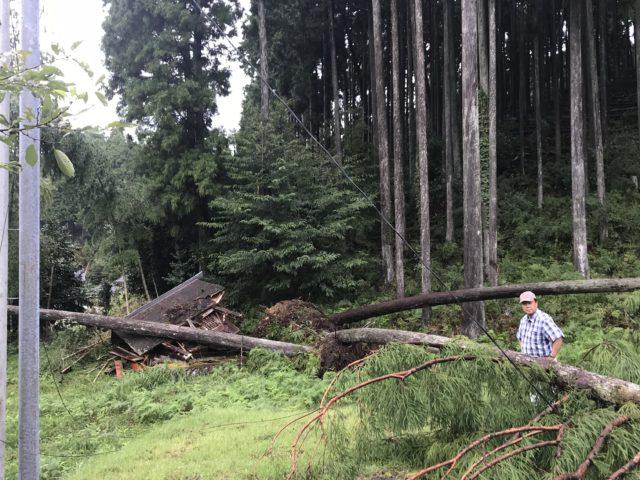 【京都市右京区京北上弓削町】地元の神社「熊野神社」の社を壊した台風倒木を、搬出しました