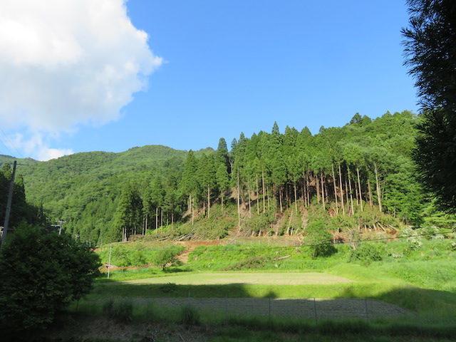 【京都府南丹市知見八原田】倒木で鹿ネットが傷んだ、ネット周辺の木を伐って出して欲しい