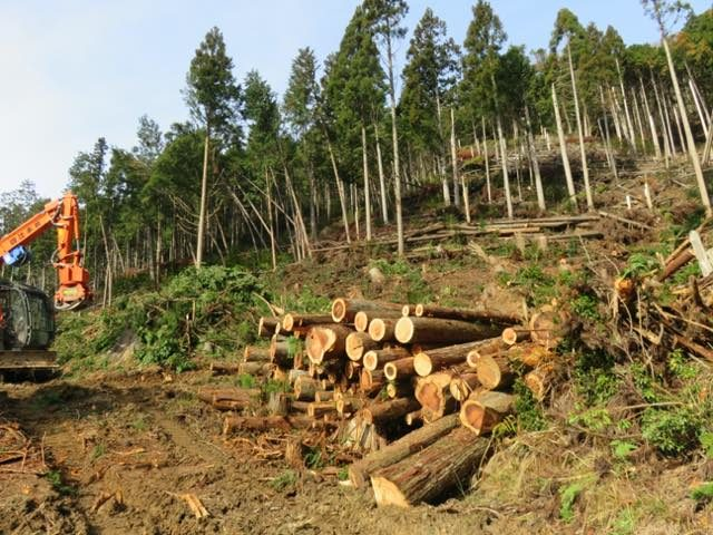 【京都府南丹市美山町原】集落の民家の裏山の台風倒木を搬出