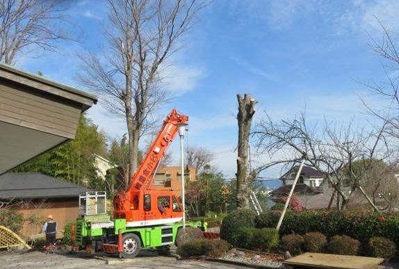 危険木伐採という仕事を請け負うことがあります。