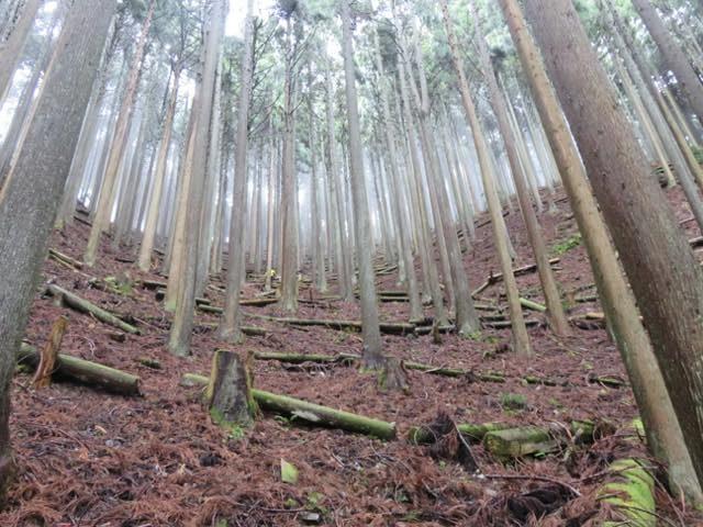 【京都市右京区京北大野町博士】体験上最長約1000mの架線で木を搬出しました