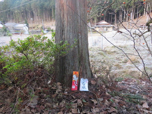 【京都市右京区京北上弓削町】家のそばに立ってるスギの伐採