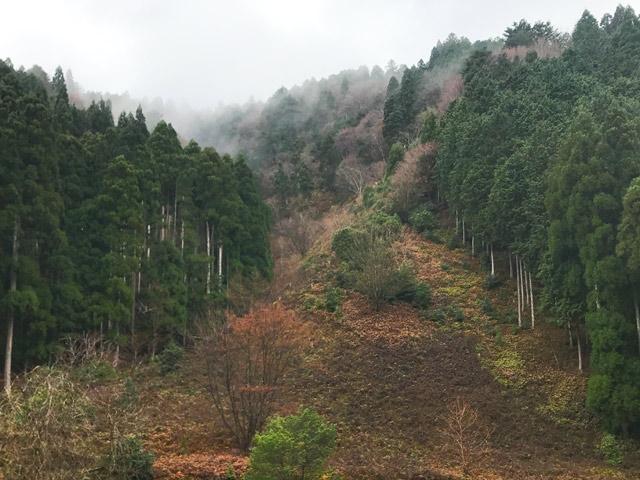 山を伐採したあと放っておけば、もののけ姫の原生林みたいになるんじゃないの?についてキコリが答えます。