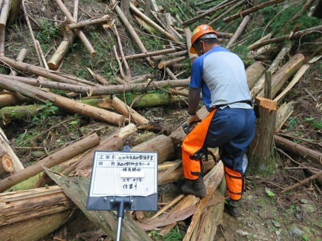 【京都市京北小塩町】木をふとらせるための保育間伐作業をしました。