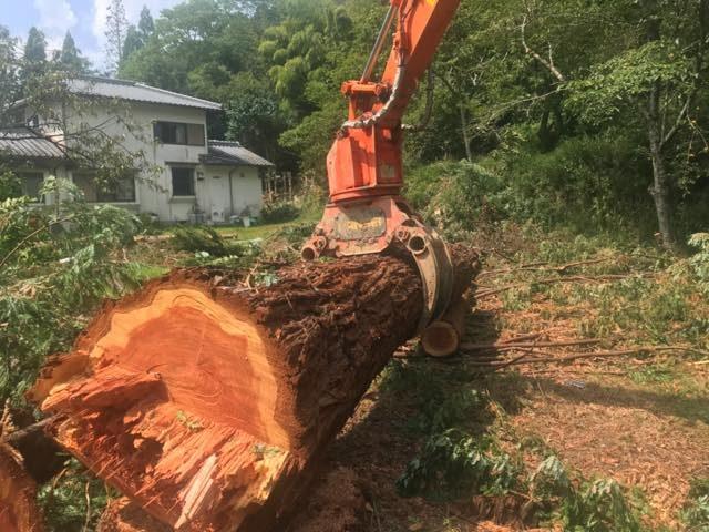 【大阪府豊能郡能勢町】お屋敷の敷地内のモミ、メタセコイアの伐採と搬出