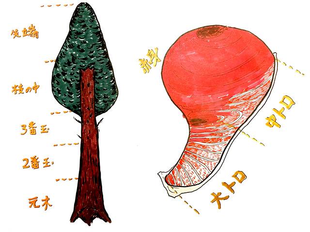 木とマグロは同じ。