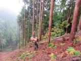 木こりはどうやって山から大きな木を運んでてくるの?